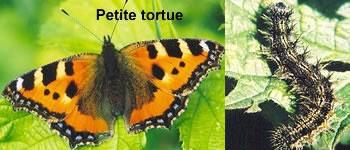 Et la chenille devient papillon isundgau chroniques histoire sorcellerie croyances - Chenille orange et noir ...
