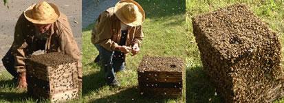 abeilles-02