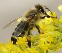 abeilles-03