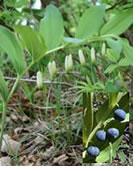 plantes-dangereuses-08
