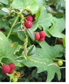 plantes-dangereuses-13