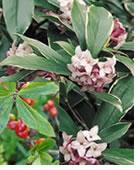 plantes-dangereuses-15