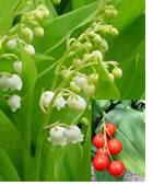 plantes-dangereuses-21